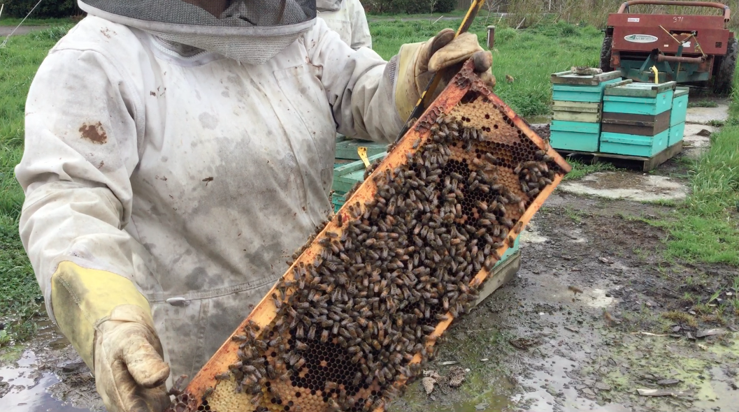The bee colony that makes Moon Valley Organics beeswax